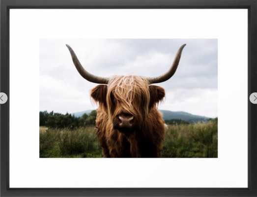 Scottish Highland Cattle in Scotland Portrait II Framed Art Print - Society6