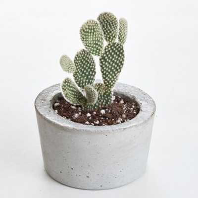 KENZIE CONCRETE BARREL PLANTER WITH CACTUS, GRAY - Lulu and Georgia