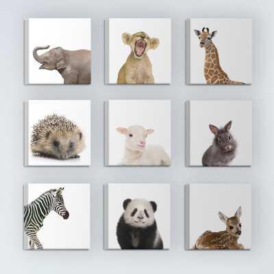 'Baby Animal Studio Portraits' 9 Piece Canvas Wall Art Set - Wayfair