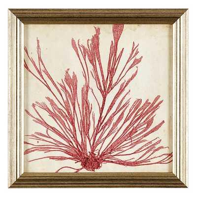 Ballard Designs Petite Vintage Seaweed Art, IX - Ballard Designs