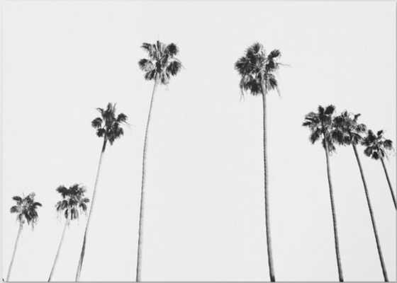 Black & White Palms Canvas Print 34 x 24 - Society6