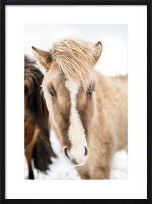 ICELANDIC HORSE - Artfully Walls