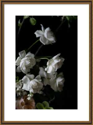 """floral study,20"""" x 28"""", with mat,  Black Gold Reverse Wood, frame width 1"""", depth 1.125"""" - Artfully Walls"""