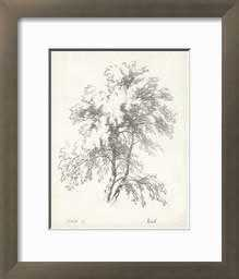 Birch Tree Study - art.com