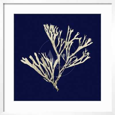 Seaweed on Navy II - art.com