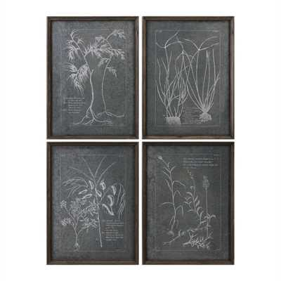 Root Study, Framed Print S/4 - Hudsonhill Foundry