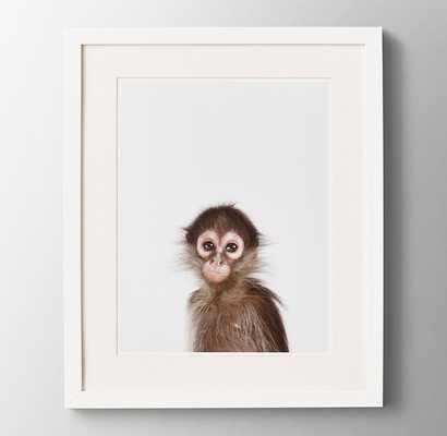 BABY ANIMAL CLOSE-UP PORTRAIT - MONKEY - RH Baby & Child