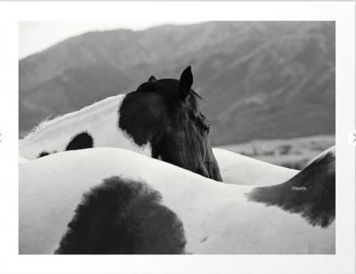 Pinto Horse Photograph Art Print - Society6