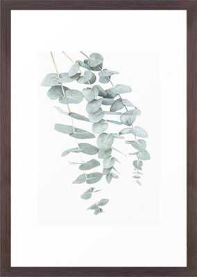 Eucalyptus II Framed Art Print (Conservation Walnut) - Society6