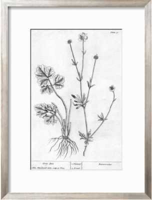 BLACK AND WHITE DRAWING OF LEAVES AND A STEM WITH FLOWERS - art.com