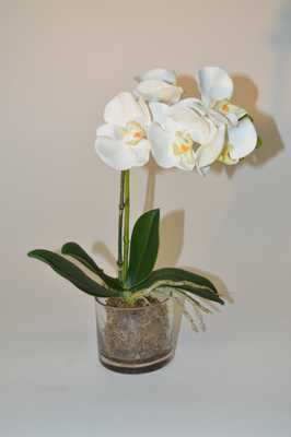 White Orchid in glass vase - Tisbury Vale