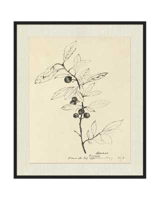 FLORAL STUDY 1 Framed Art - McGee & Co.