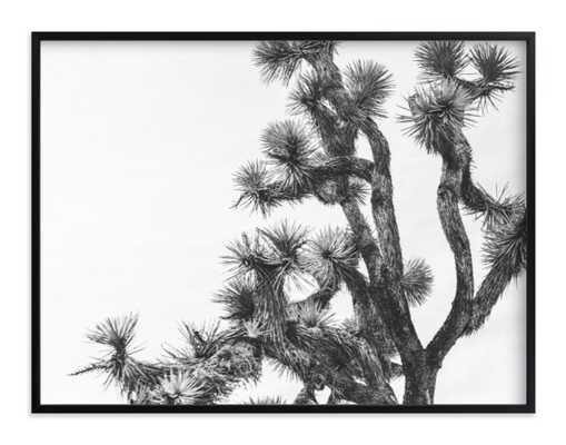"joshua tree in september, 40""x30"", Rich Black Wood Frame - Minted"