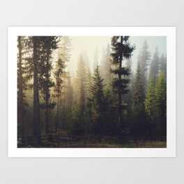 Sunrise Forest Framed Art Print - Society6