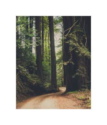Walk Into the Woods - Minted