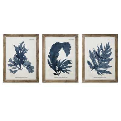 'Vintage Fronds' Framed Graphic Art Print - Wayfair