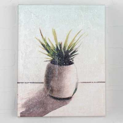 SPIKY SUCCULENT ON CANVAS - Shades of Light