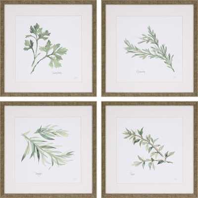 Herbs' 4 Piece Framed Graphic Art Print Set - Wayfair