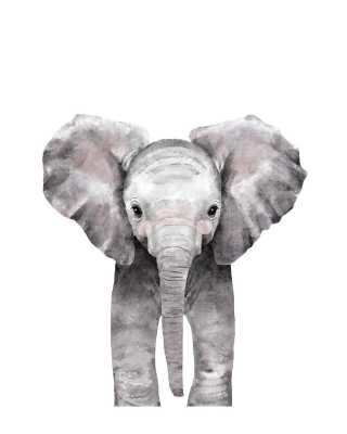"Baby Animal Elephant, 16""x20"", Unframed Print - Minted"