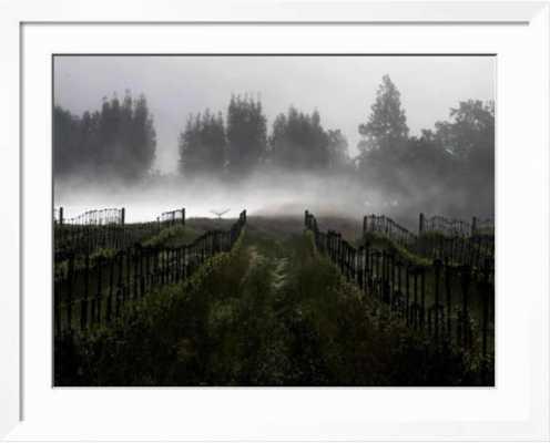 Morning Fog Rises from a Vineyard North of Sonoma, Calif. - Framed, Soho White - art.com