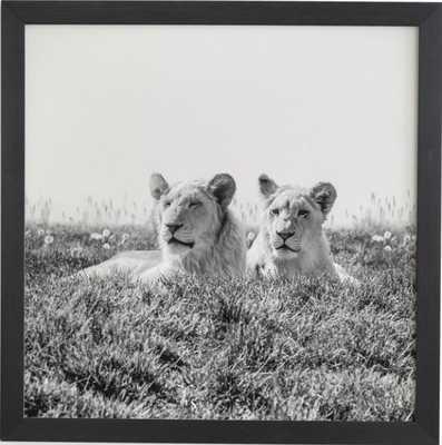LIONS - Wander Print Co.
