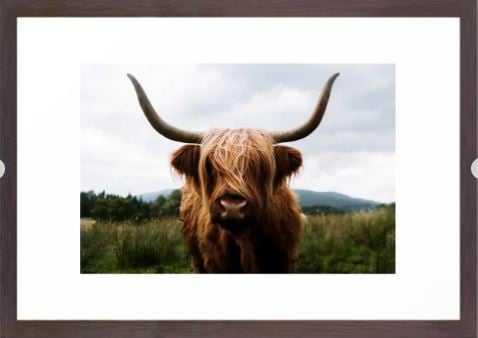 Scottish Highland Cattle in Scotland Portrait II Framed Art Print - Wander Print Co.