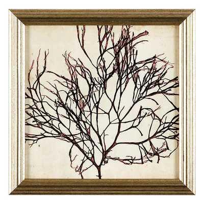 Ballard Designs Petite Vintage Seaweed Art, II - Ballard Designs