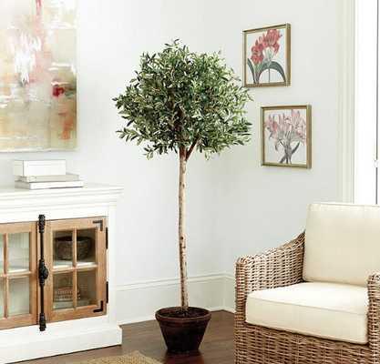Olive Tree - Ballard Designs