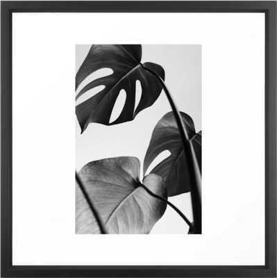 monstera, monstera deliciosa, monstera plant, monstera leaf, black and white, photography, Art Print Framed Art Print - Society6
