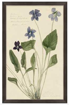 Reverend's Floral Study, Botanical Prints - High Street Market