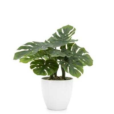 """Villa 5.5"""" Diameter Faux Potted 12"""" Plant in Monstera design by Torre & Tagus - Burke Decor"""