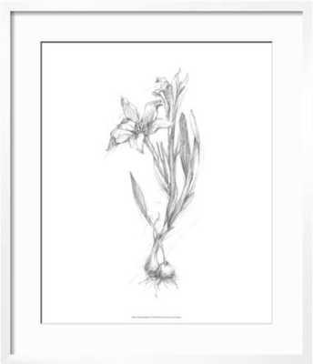 "Botanical Sketch I, Framed art print 18""x 22"", 2.5"" mat - art.com"