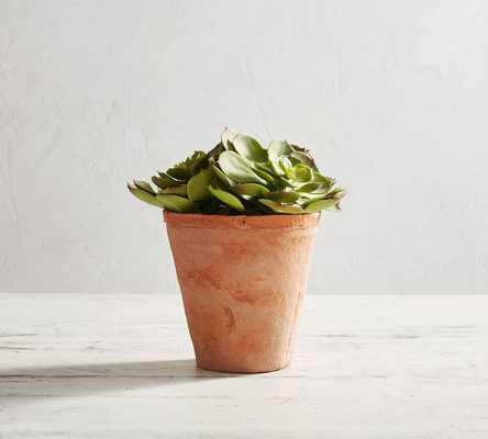 Potted Faux Echeveria Succulent, Small - Pottery Barn