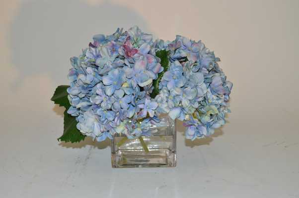 Blue Hydranges in square glass vase - Tisbury Vale