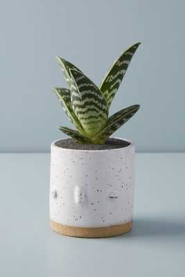 Face Planter - Anthropologie