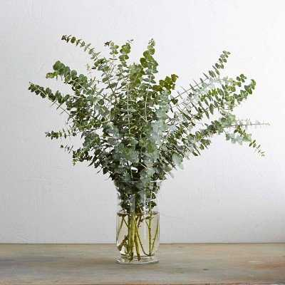 Spiral Eucalyptus Branches (Real Branches) - Williams Sonoma