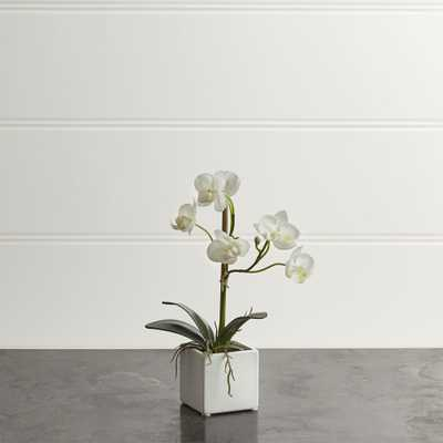 Small Potted Orchid Plant - Crate and Barrel