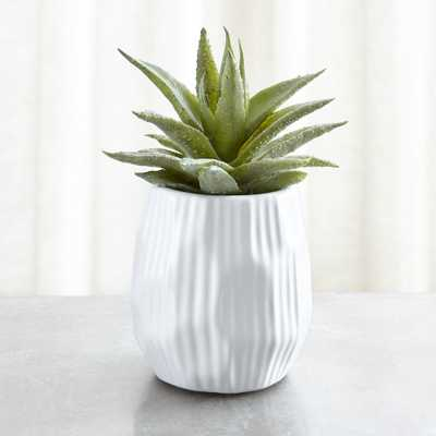 Potted Faux Single Succulent Plant - Crate and Barrel
