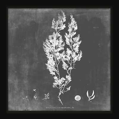 PTM Images Lichen I Framed Graphic Art - eBay
