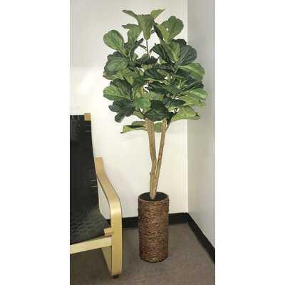 Fiddle Leaf Fig Tree in Basket - Wayfair