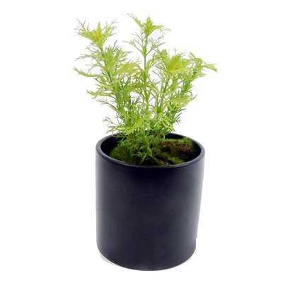 Dill Foliage Faux Plant in Pot - Wayfair