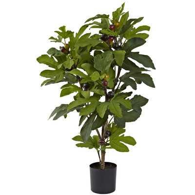 Fig Tree in Pot - Wayfair