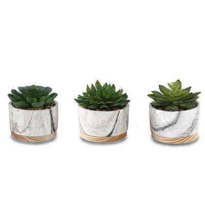 3 Piece Succulent Plant in Pot Set - Wayfair