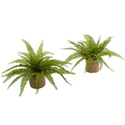 15 in. Boston Fern with Burlap Planter (Set of 2) - Home Depot