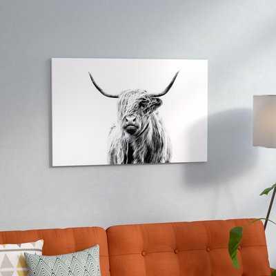 'Portrait of a Highland Cow' Photographic Print - Wayfair