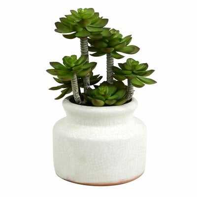 Succulent in Pot - Wayfair