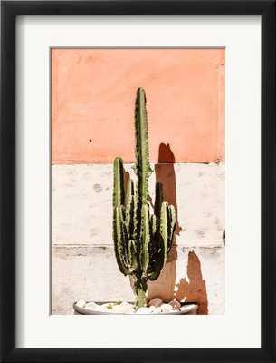 Cactus near Wall - art.com