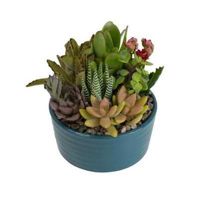 5.5 in. Atlantic Blue Ribbed Glazed Succulent Garden Plant - Home Depot