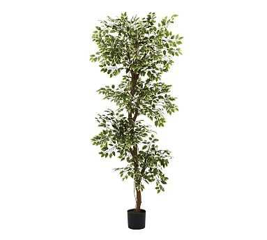Faux Variegated Ficus Tree, 6' - Pottery Barn