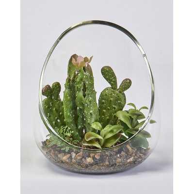 Cactus & Succulent in Glass Vase - Wayfair